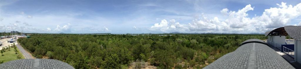 Mangrove views